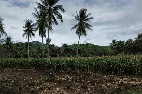 Lahan pertanian yang diantisipasi saat kemarau dan banjir
